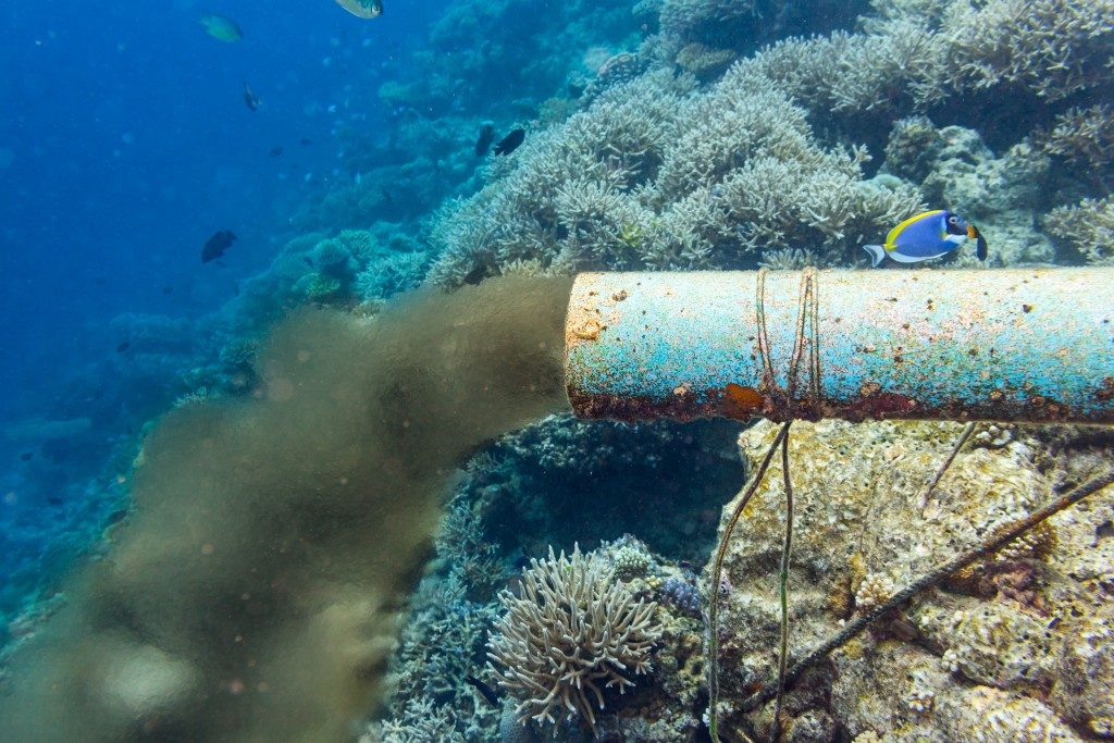 underwater sewer pipe in coral reef