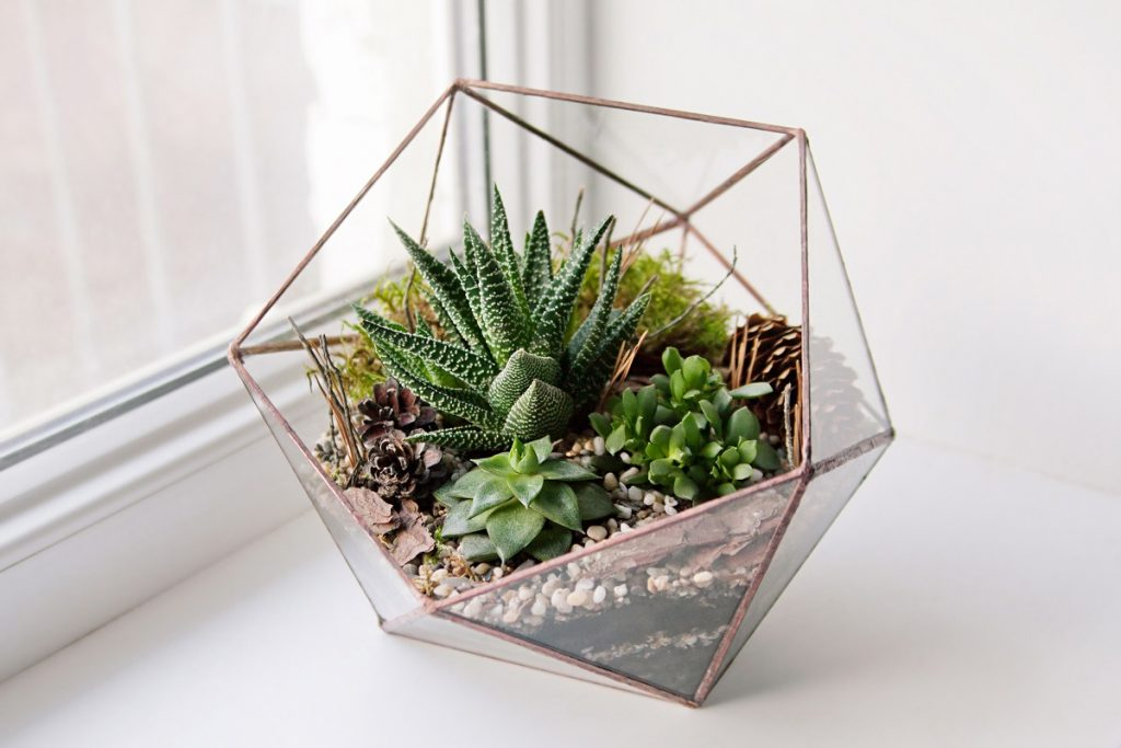 Terrarium beside the window