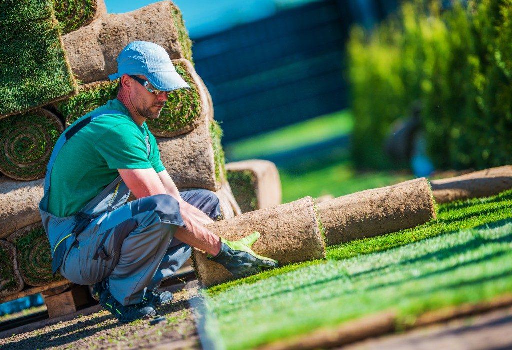 Gardener installing turf grass