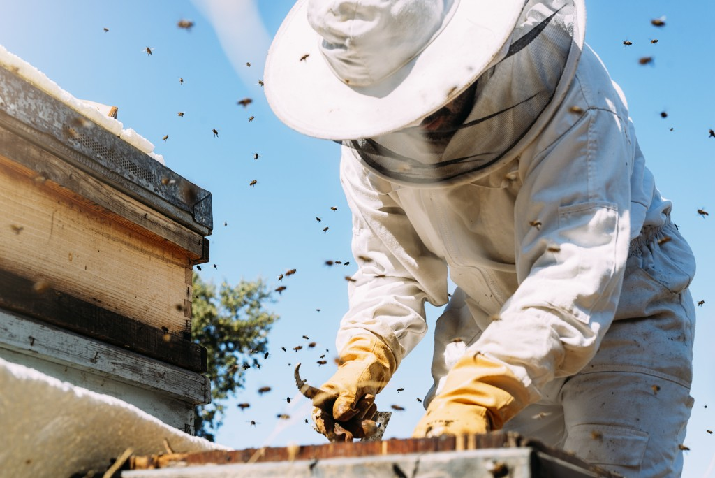 man beekeeping